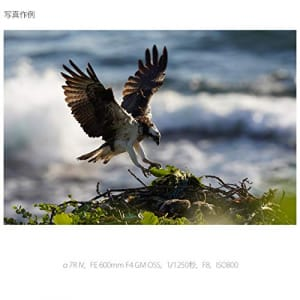 https://images-fe.ssl-images-amazon.com/images/I/41RRG2-sIoL.jpg