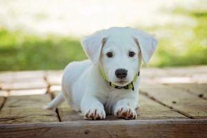 https://cdn.pixabay.com/photo/2016/12/13/05/15/puppy-1903313_960_720.jpg