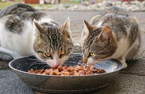 https://cdn.pixabay.com/photo/2019/07/30/09/51/cats-4372525_960_720.jpg