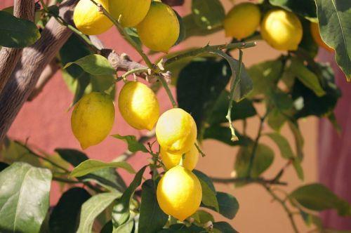 https://cdn.pixabay.com/photo/2020/02/06/18/18/lemons-4825104_960_720.jpg