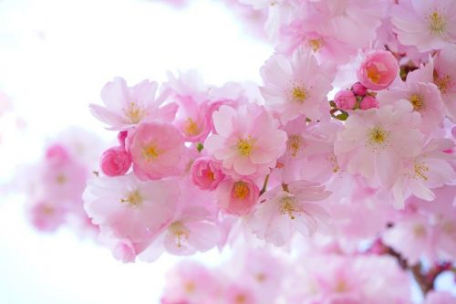 https://cdn.pixabay.com/photo/2014/04/14/20/11/pink-324175_960_720.jpg